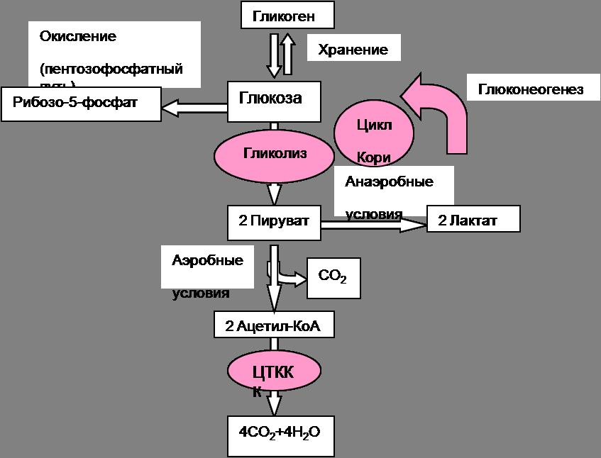 Особеннности биохимии и физиологии развития, которых необходимо учитывать при инкубации яиц.