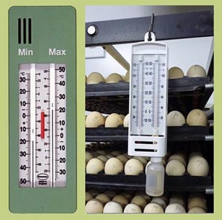 Условия хранения яиц в домашних условиях