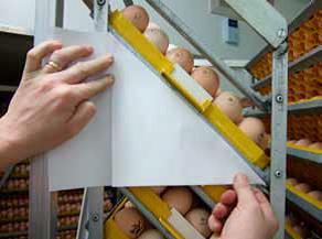 Проверка угла поворота яиц