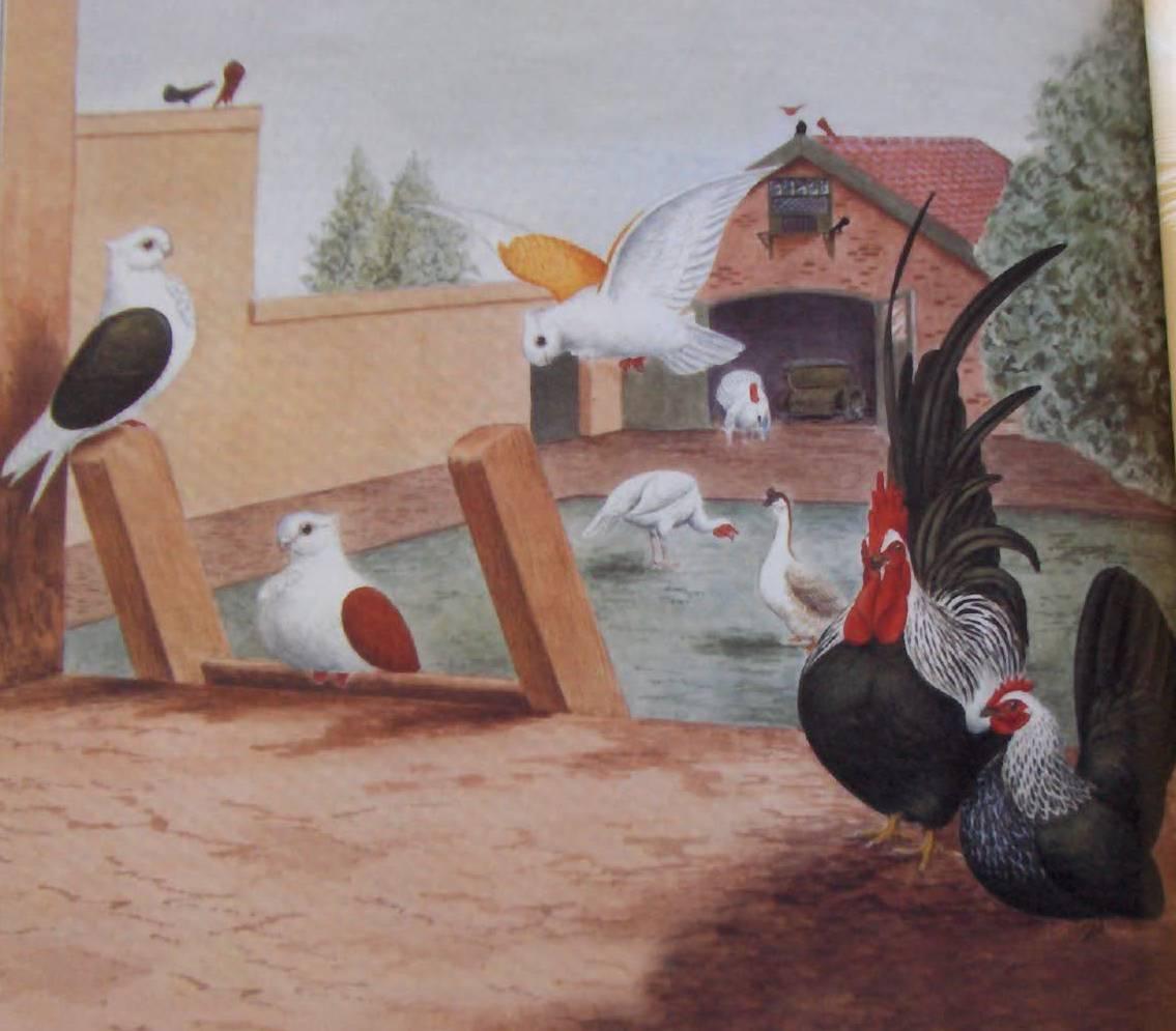 ЯПОНСКИЕ БЕНТАМКИ (серые или черно-пестрые)