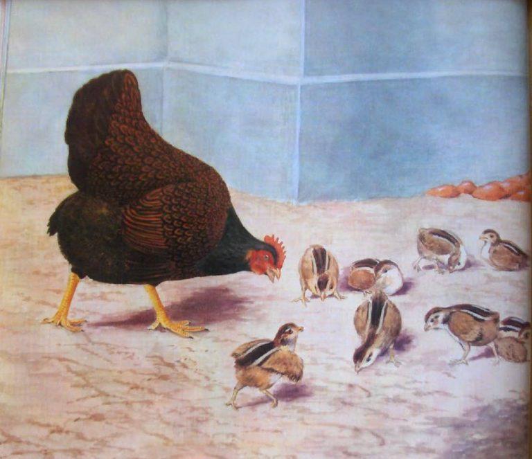 БАРНЕВЕЛЬДЕР (темная курица с цыплятами)