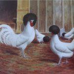 ПОЛЬСКИЕ БЕЗБОРОДЫЕ (белые чернохохлые)