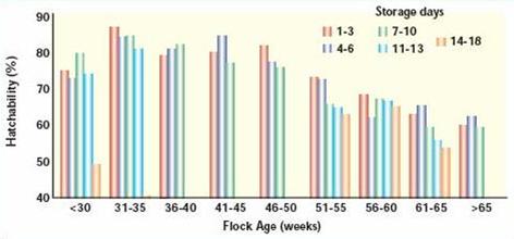 Влияние возраста стада на выводимость храненившихся яиц
