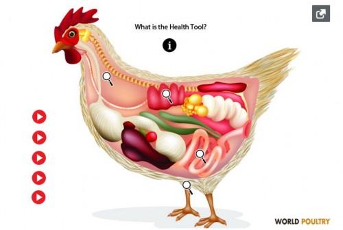 Инструмент здоровья